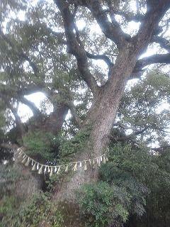 f:id:tocotocokuwana:20170203085148j:plain