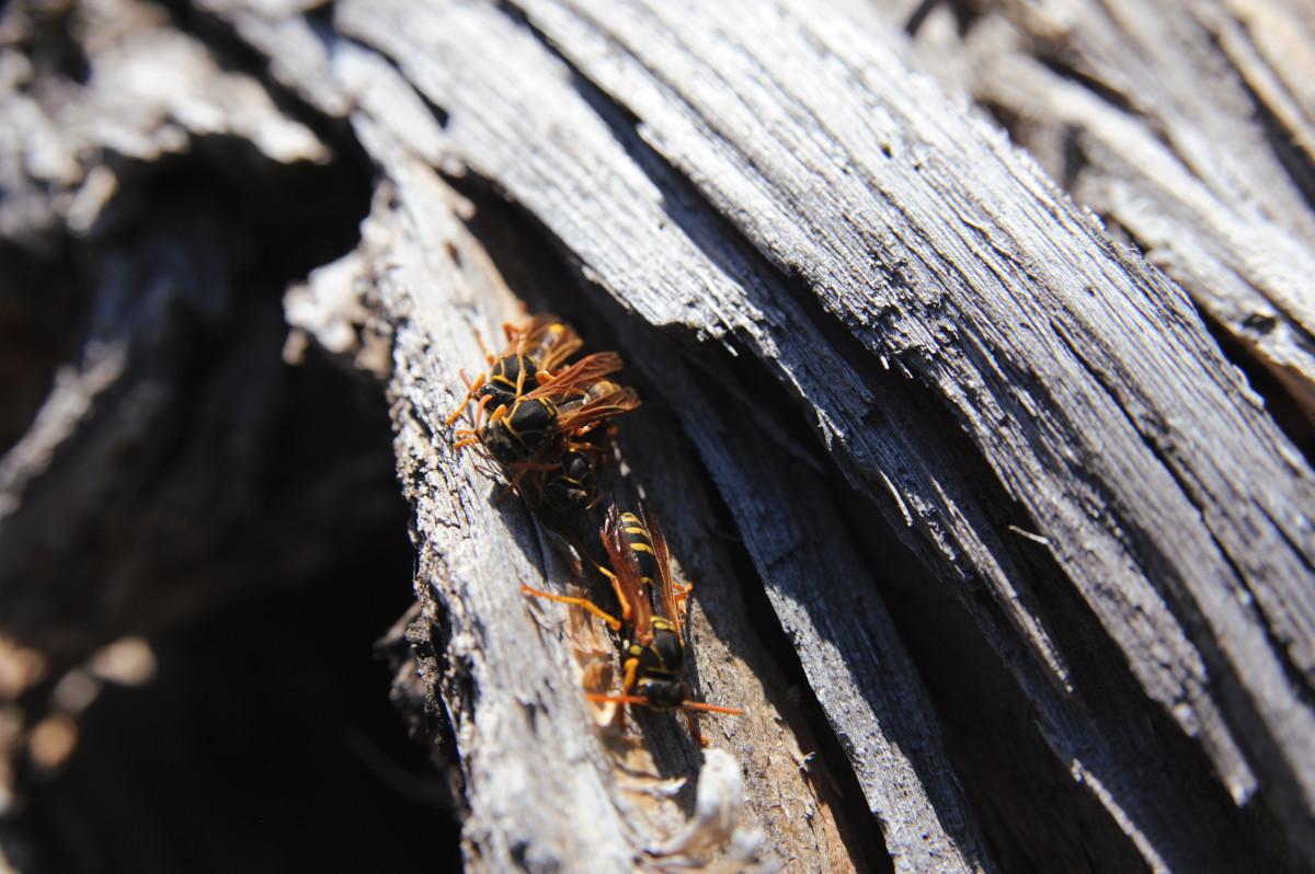 「薪には虫が居る」でもなんとか減らしたい薪ストーブユーザーの対策