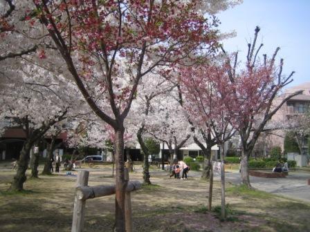 f:id:tohka-dayori:20140331143300j:image