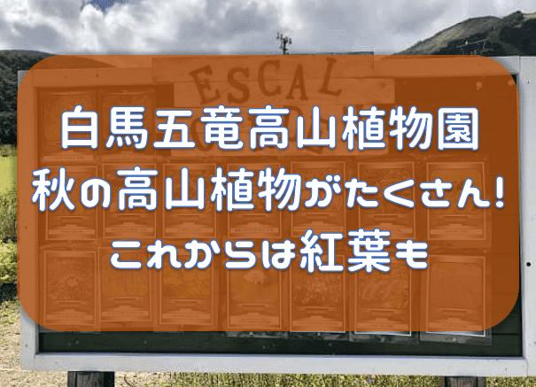 f:id:tokaman0105:20191012171802p:plain