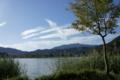 京都新聞写真コンテスト 木(雲が)