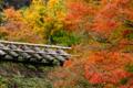 京都新聞写真コンテスト 調和