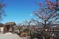 京都新聞写真コンテスト 虚空蔵法輪寺