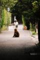 京都新聞写真コンテスト ひと休み