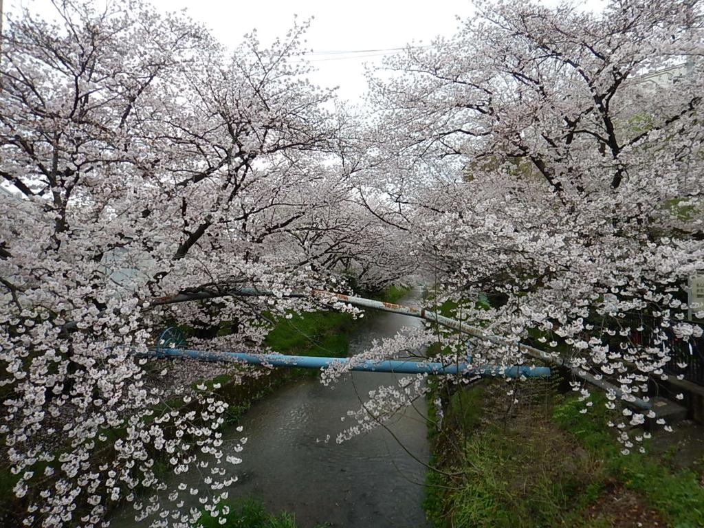 f:id:tokidokiyamanobori:20170412210835j:plain