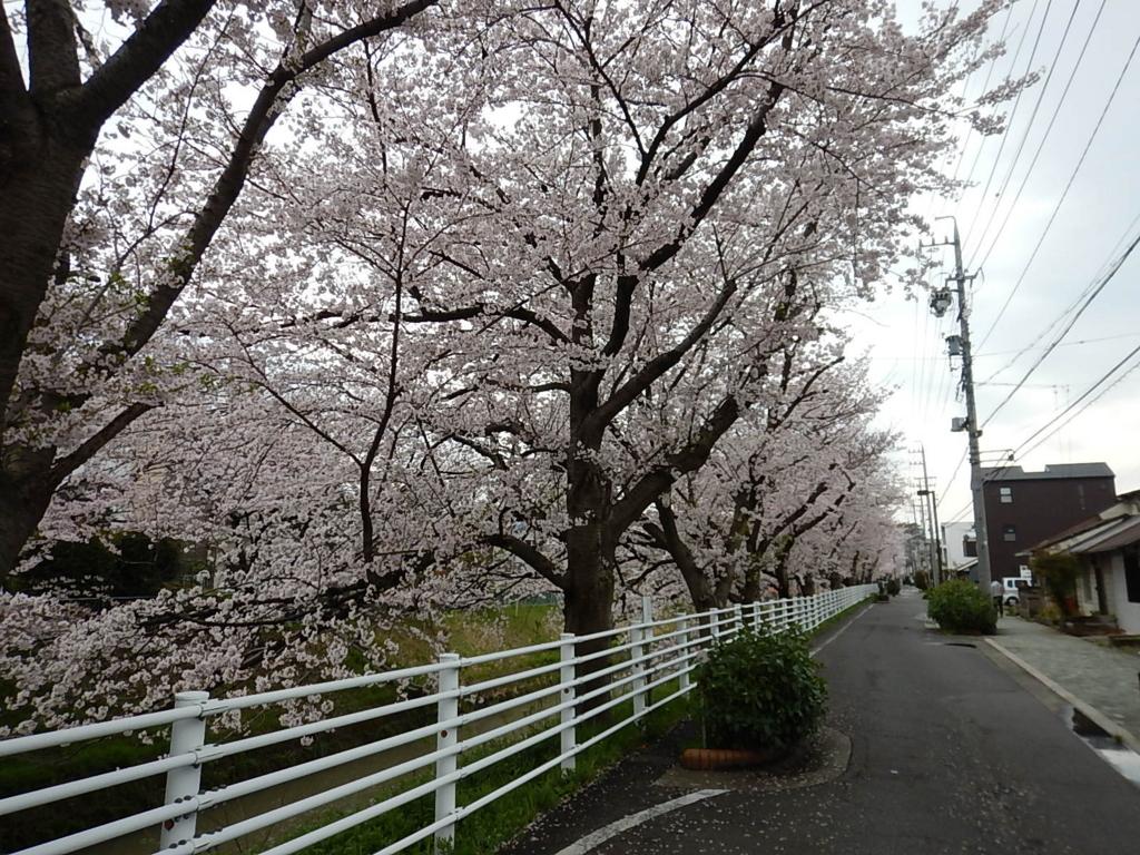 f:id:tokidokiyamanobori:20170412210928j:plain