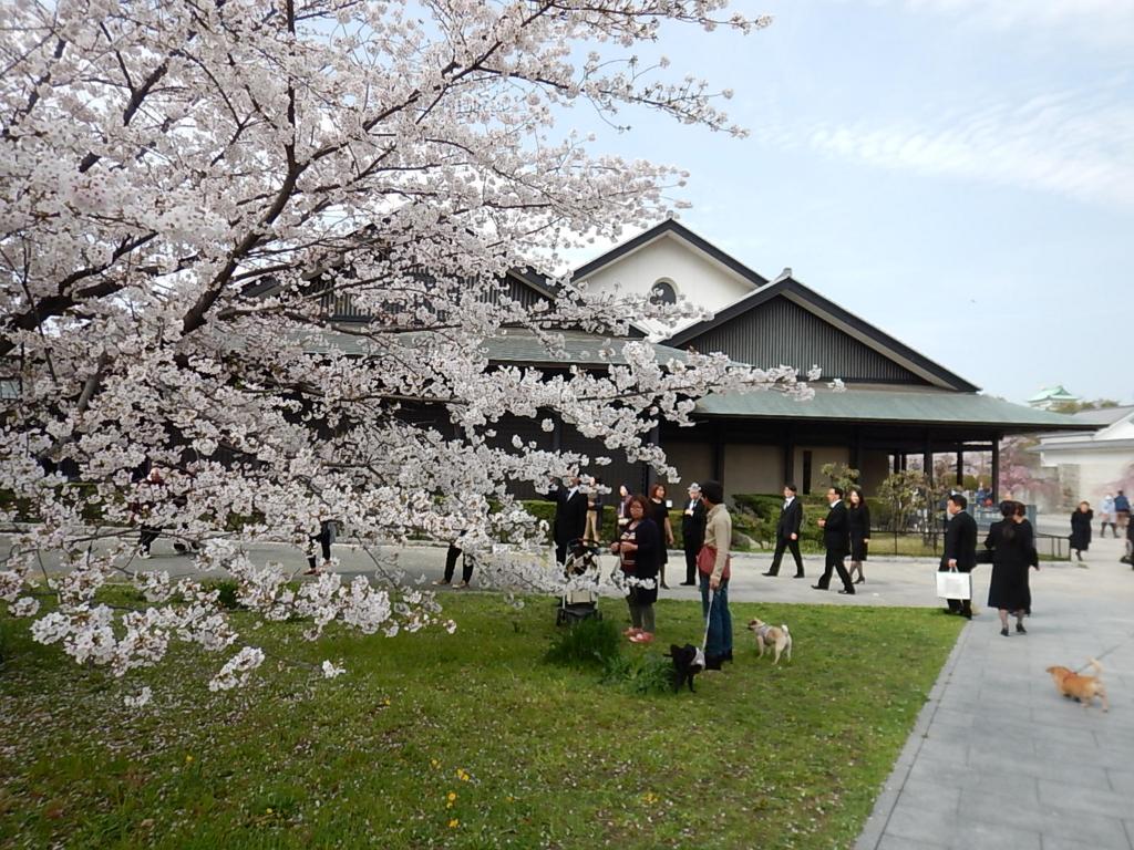 f:id:tokidokiyamanobori:20170412211720j:plain