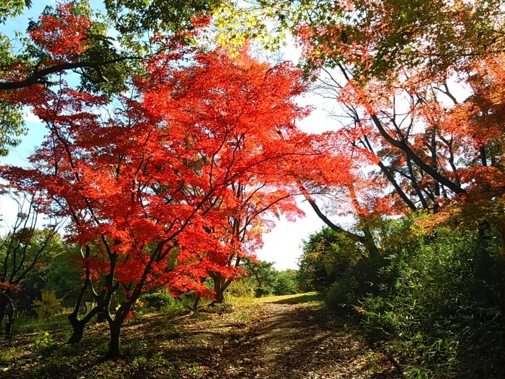 f:id:tokidokiyamanobori:20171112155944j:plain