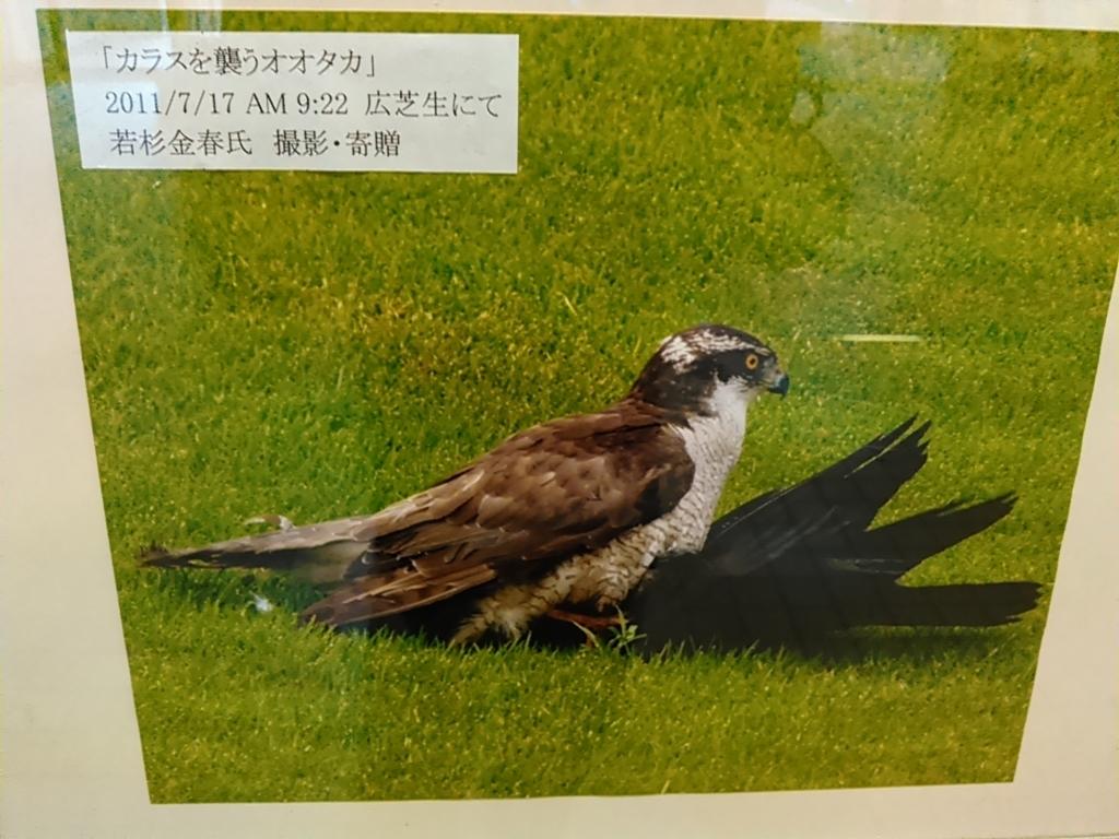 f:id:tokidokiyamanobori:20171112161024j:plain