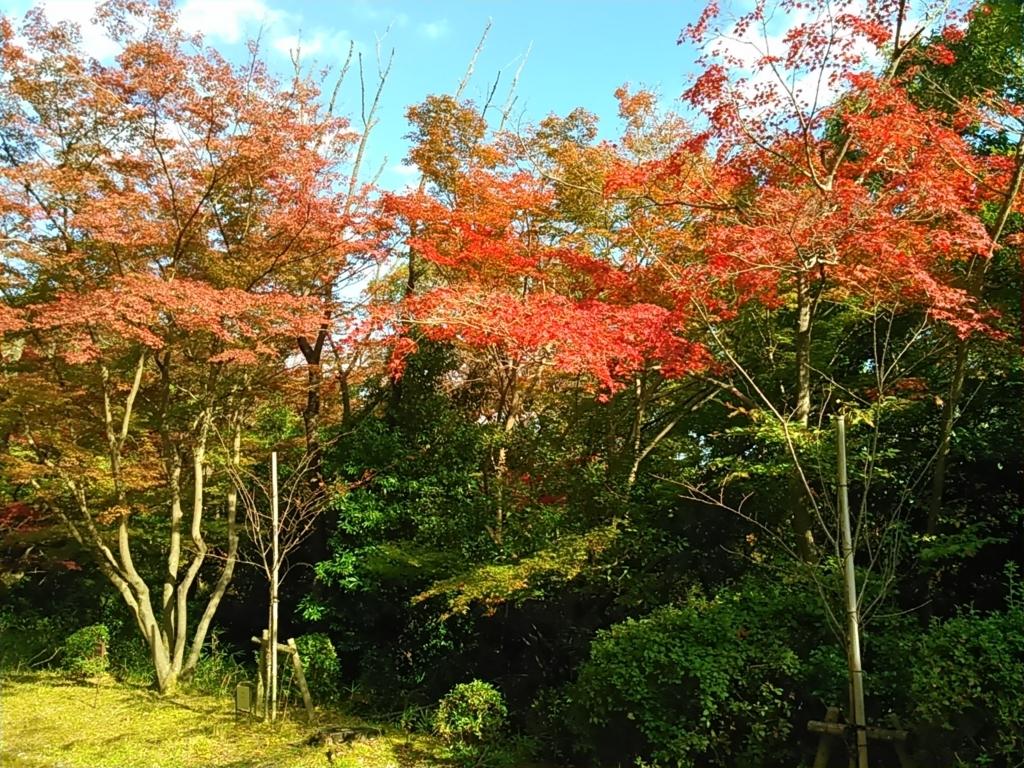 f:id:tokidokiyamanobori:20171112161227j:plain