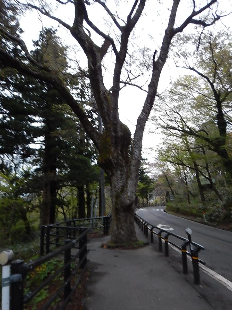 f:id:tokidokiyamanobori:20190511114859j:plain