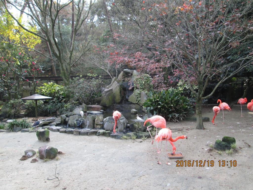 f:id:tokihimeya:20170113233820j:plain