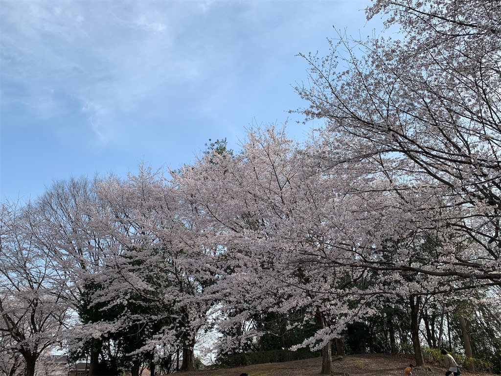 f:id:tokikomama:20210328175312j:image