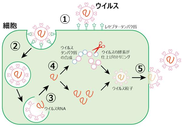 f:id:tokinokaseki:20201103195310p:plain