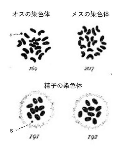 f:id:tokinokaseki:20201206205827p:plain