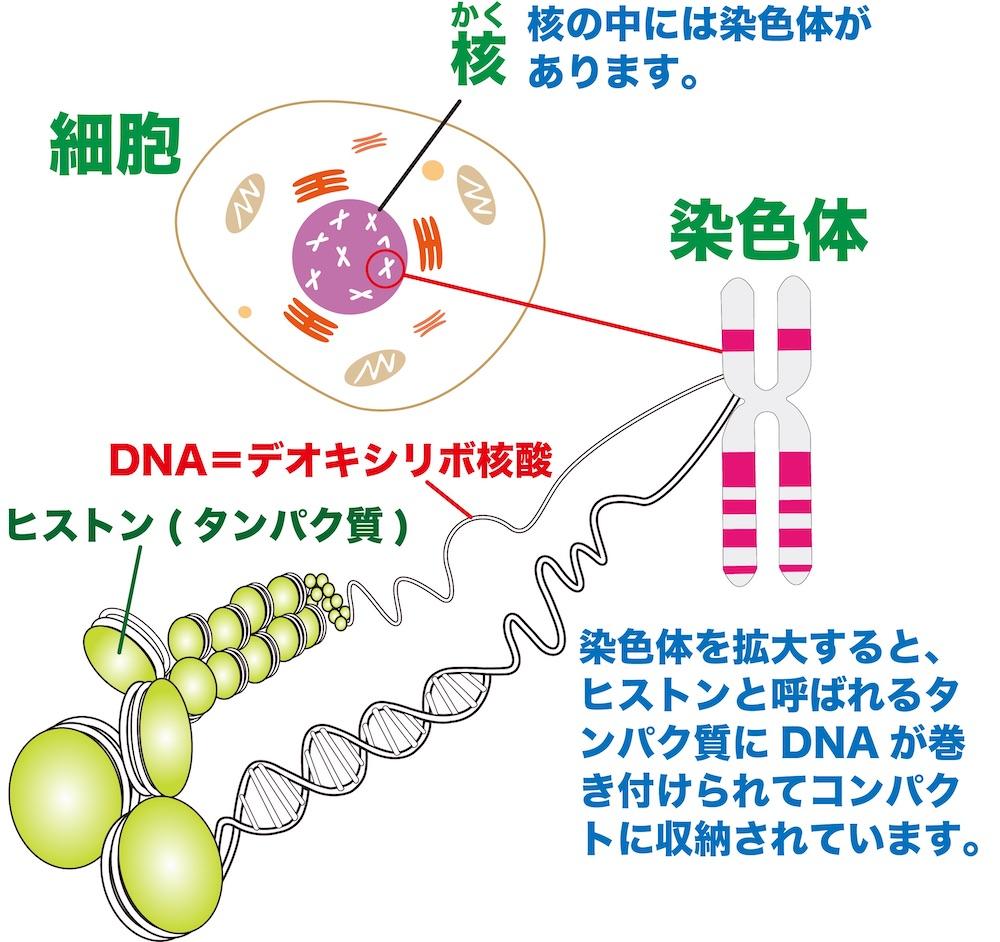 f:id:tokinokaseki:20210428194305j:plain