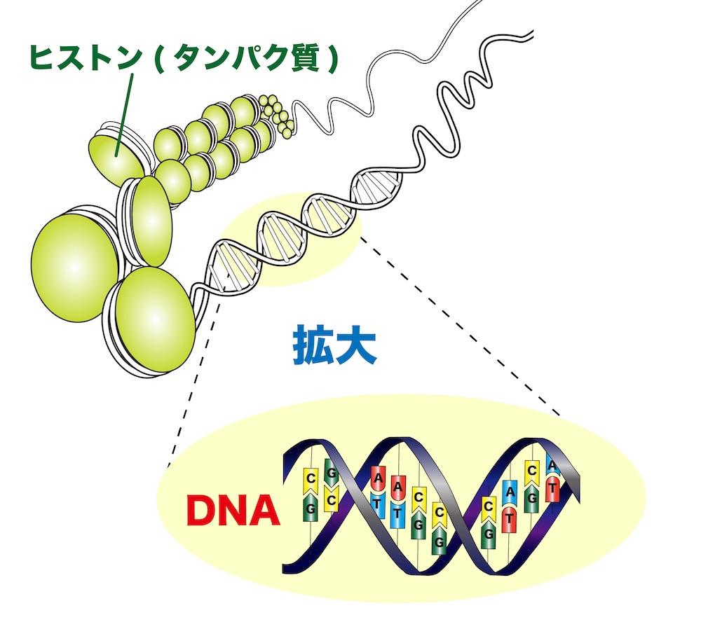 f:id:tokinokaseki:20210428194337j:plain