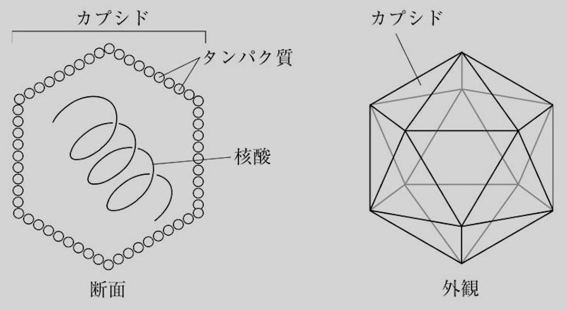 f:id:tokinokaseki:20210513215148j:plain