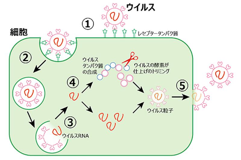 f:id:tokinokaseki:20210520155413j:plain