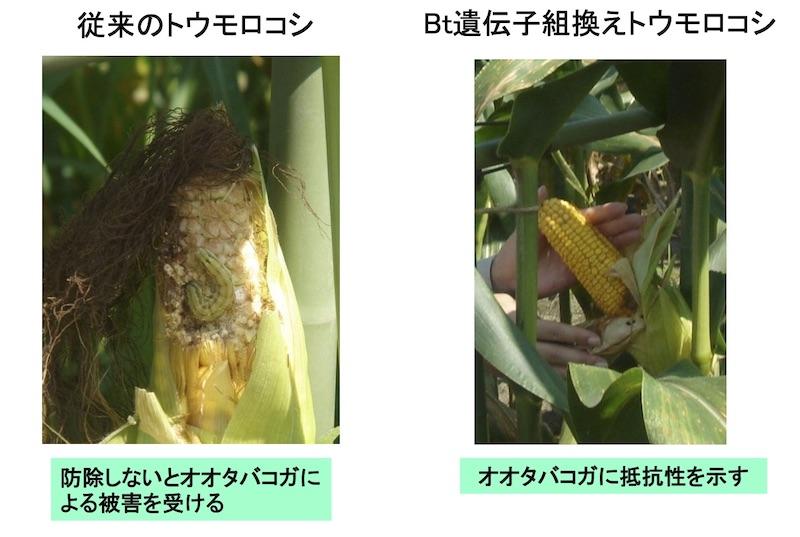 f:id:tokinokaseki:20210829210151j:plain