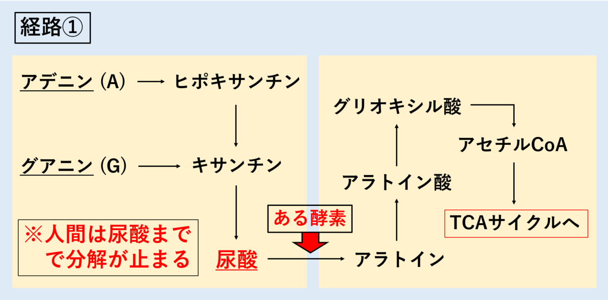 f:id:tokiotokonanawariG1:20191015182500p:plain
