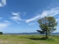琵琶湖の木(2017.9.24)