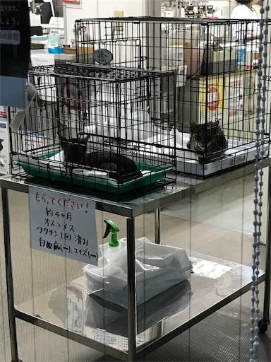 f:id:tokiwa-heizo:20180902163506j:image