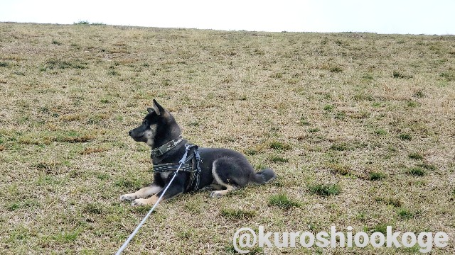 f:id:tokixshiro:20200330135205j:plain