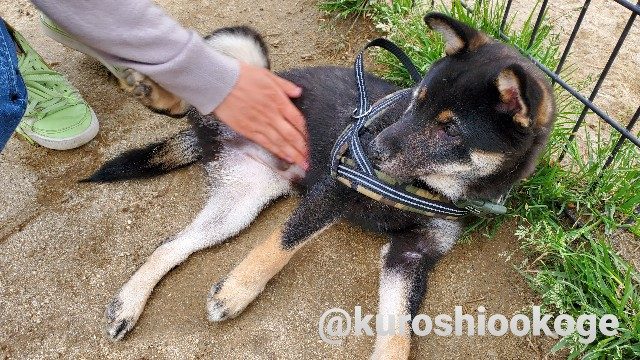f:id:tokixshiro:20200330135207j:plain