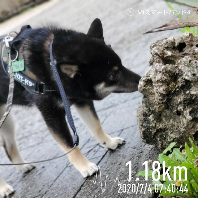 f:id:tokixshiro:20200705091543j:plain