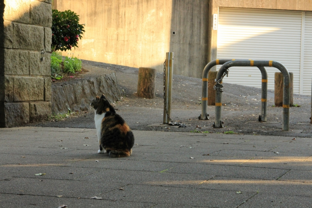 f:id:tokotoko_yuuki:20151207203544j:plain