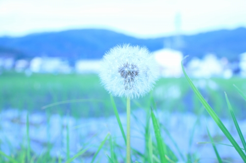 f:id:tokotoko_yuuki:20160823125213j:plain
