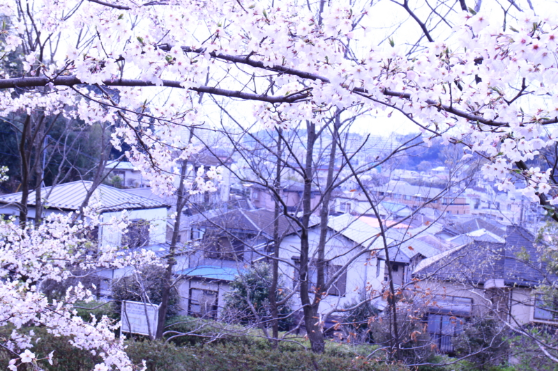 f:id:tokotoko_yuuki:20170408230531j:plain