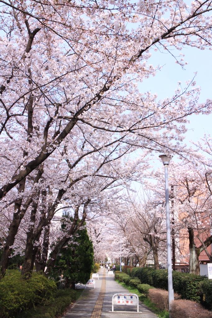f:id:tokotoko_yuuki:20170414141957j:plain