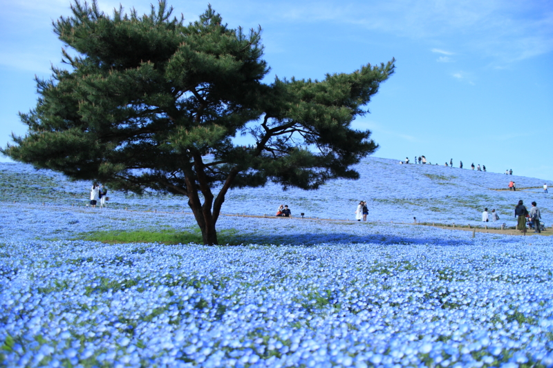 f:id:tokotoko_yuuki:20170428212027j:plain