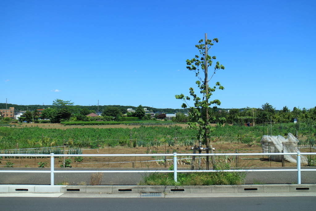 f:id:tokotoko_yuuki:20180603102327j:plain