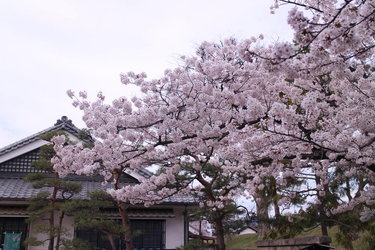 f:id:tokotoko_yuuki:20190419211947j:plain
