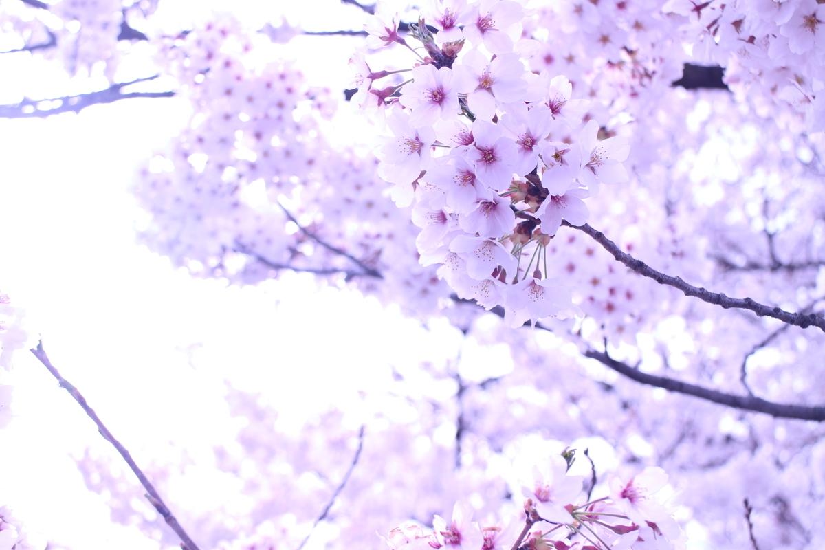 f:id:tokotoko_yuuki:20190419212425j:plain