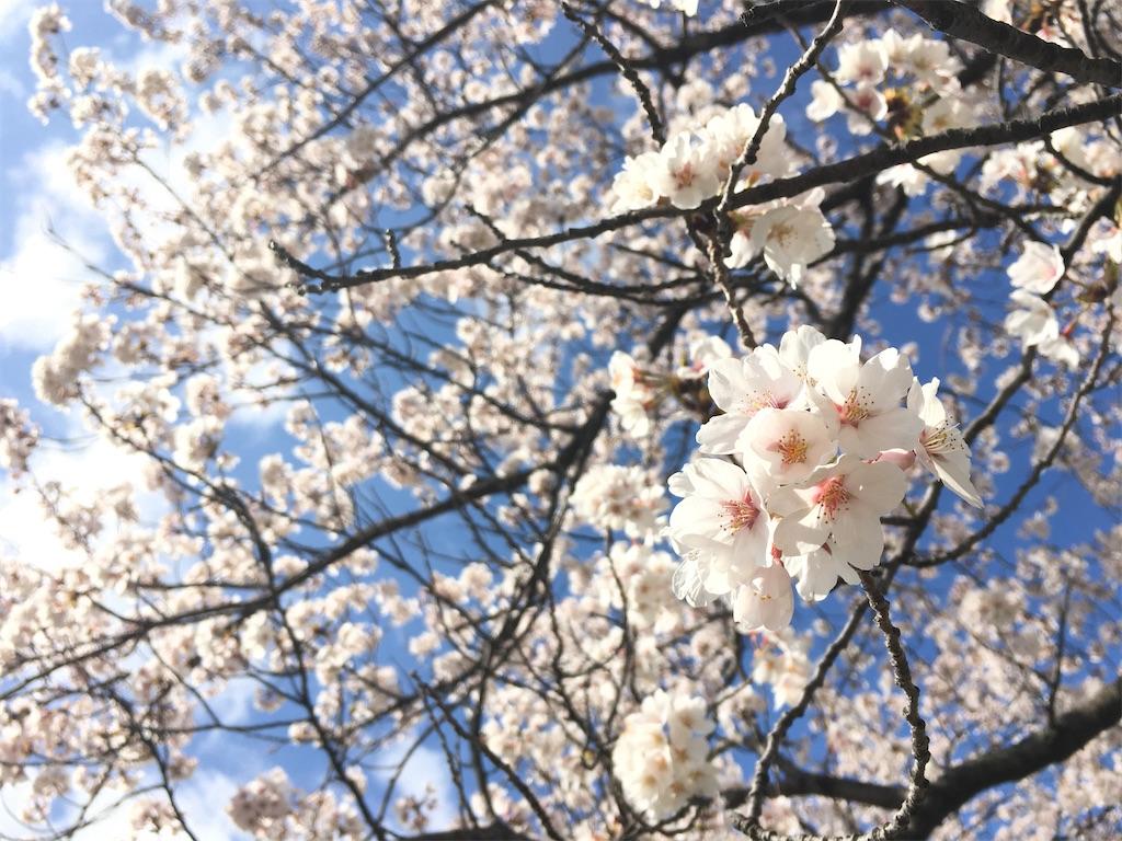 f:id:tokotoko_yuuki:20200415090339j:plain