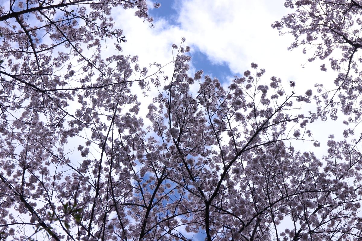 f:id:tokotoko_yuuki:20200419163450j:plain