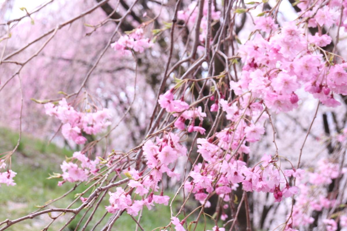 f:id:tokotoko_yuuki:20200419163517j:plain