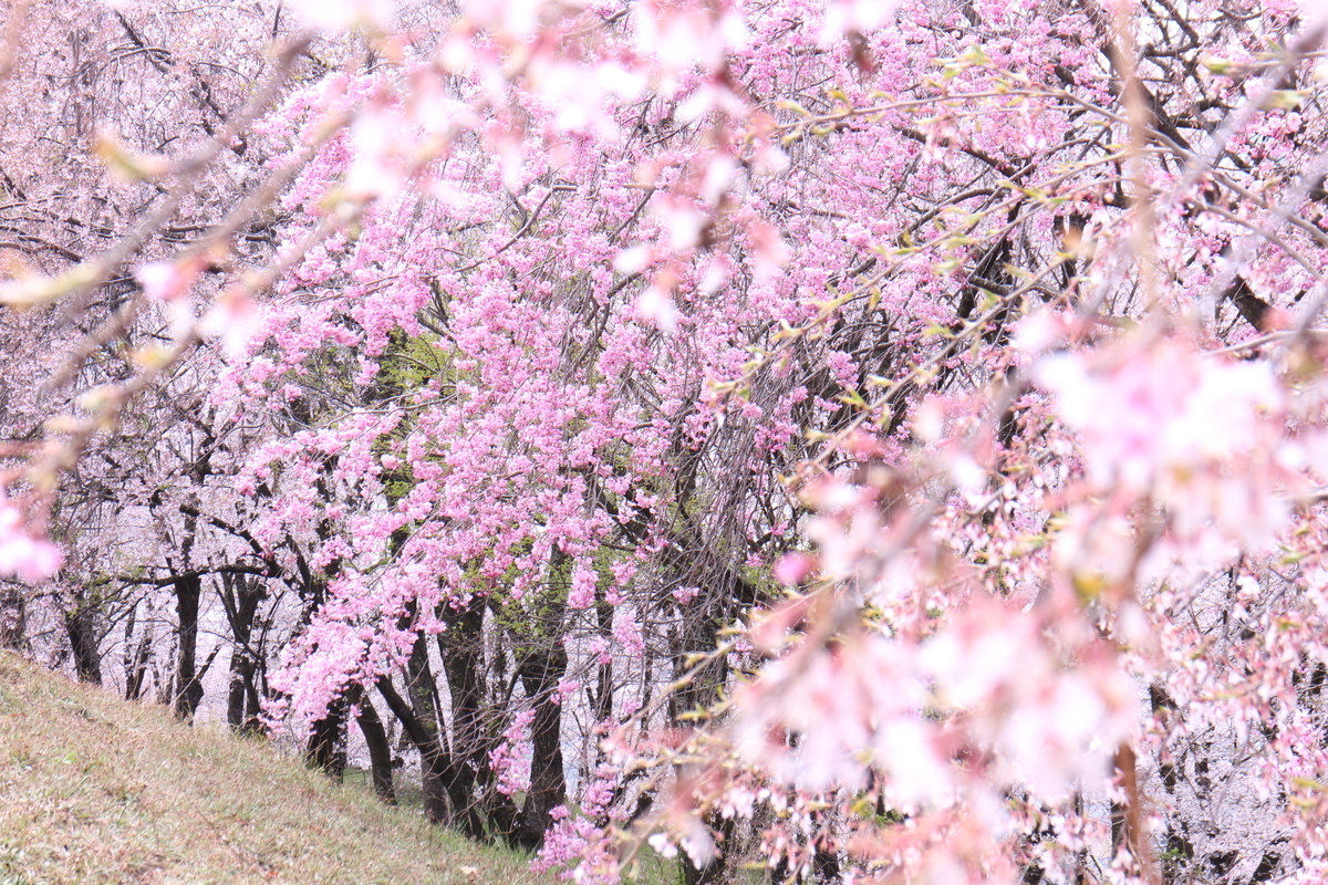 f:id:tokotoko_yuuki:20200419163532j:plain