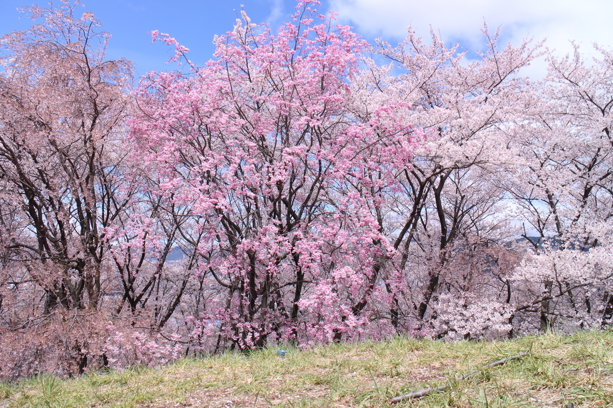 f:id:tokotoko_yuuki:20200419163612j:plain