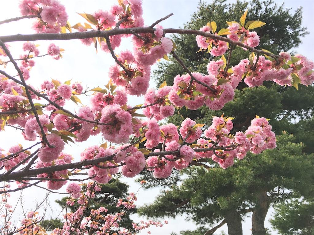 f:id:tokotoko_yuuki:20200506215600j:plain