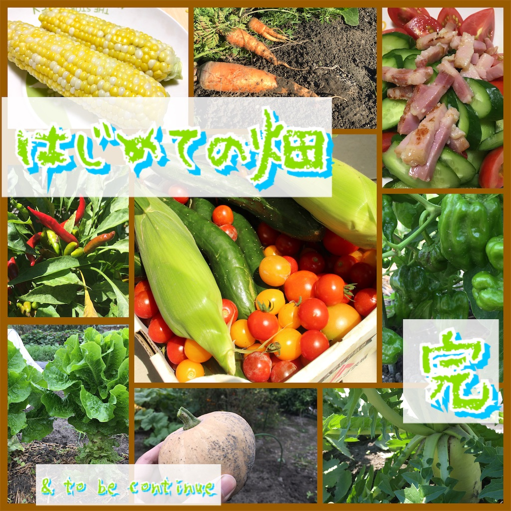 f:id:tokotoko_yuuki:20201206203047j:plain