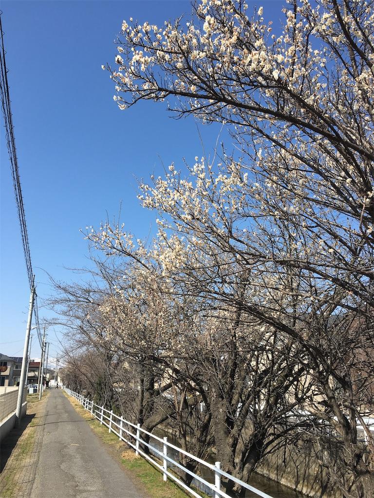 f:id:tokotoko_yuuki:20210313113214j:plain