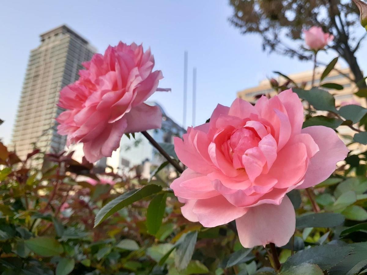 f:id:tokotokoarukuyo:20191117180410j:plain