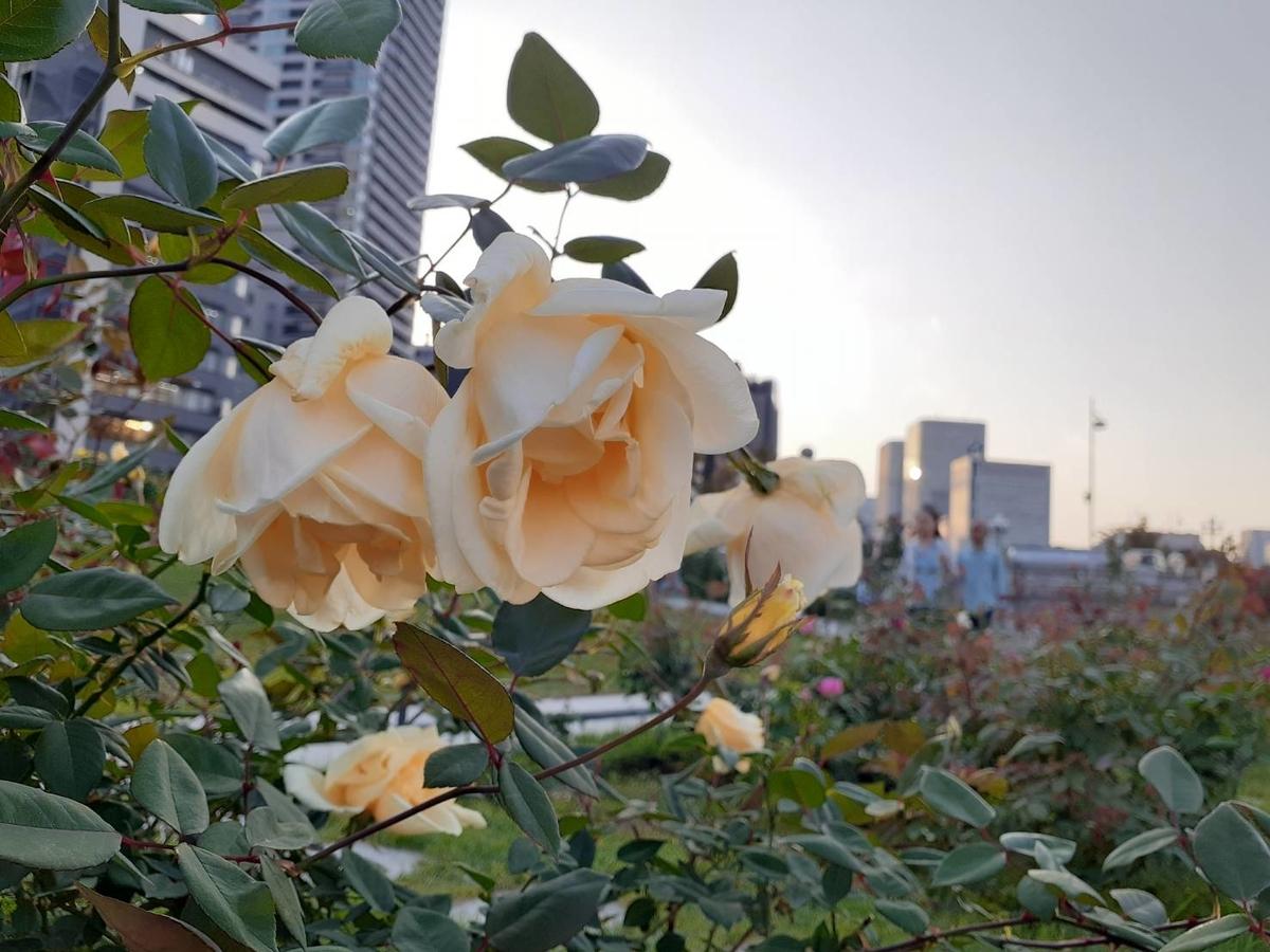 f:id:tokotokoarukuyo:20191117183050j:plain