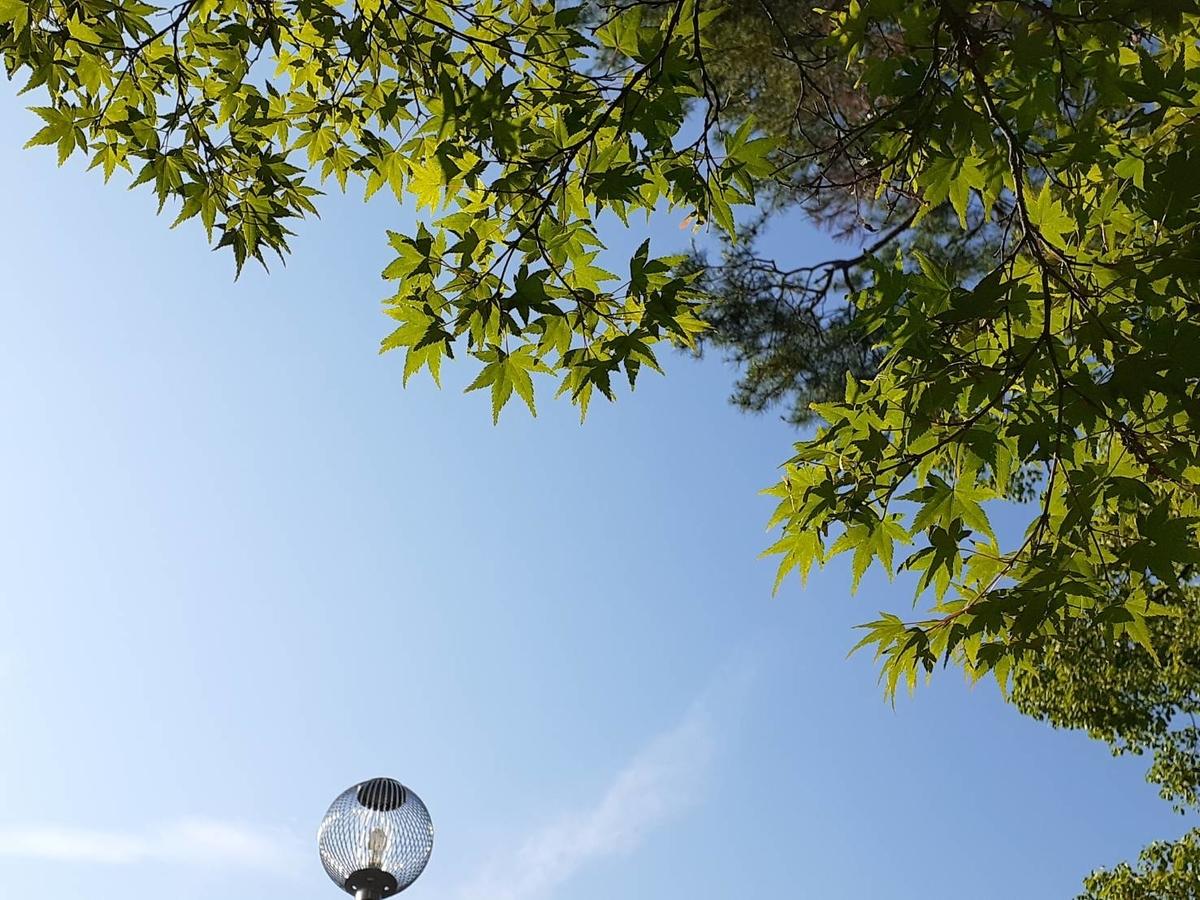 f:id:tokotokoarukuyo:20200615205638j:plain