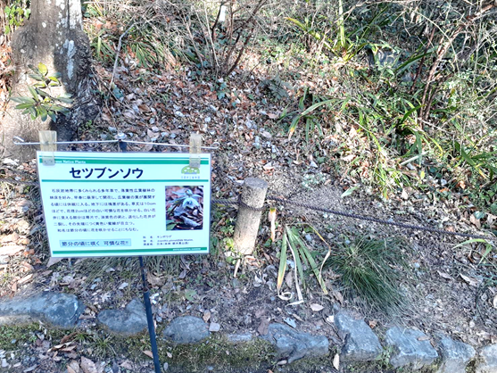 f:id:tokotokoarukuyo:20210201200049p:plain